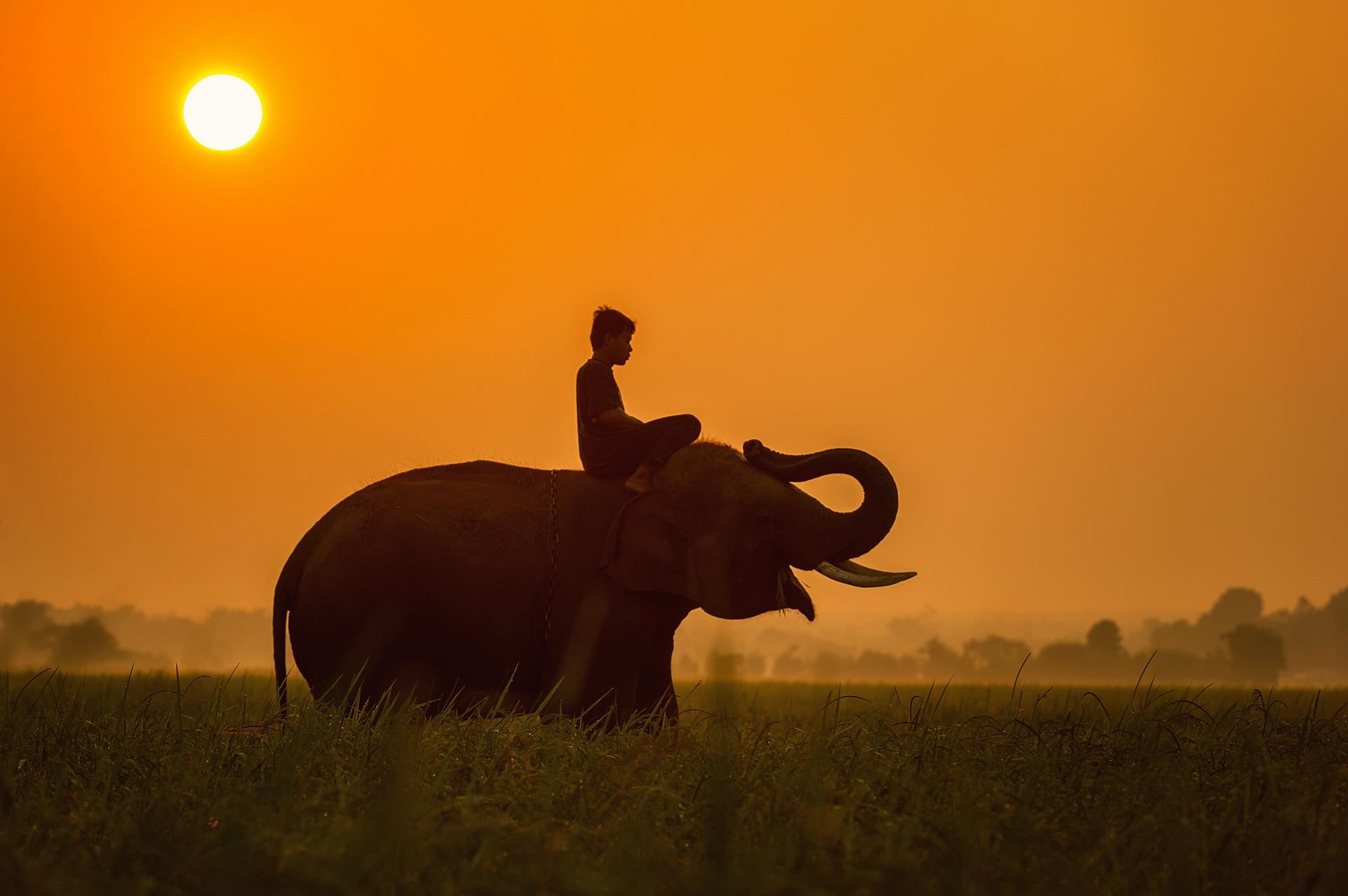 ロープに繋がれた象はなぜ逃げないのか?